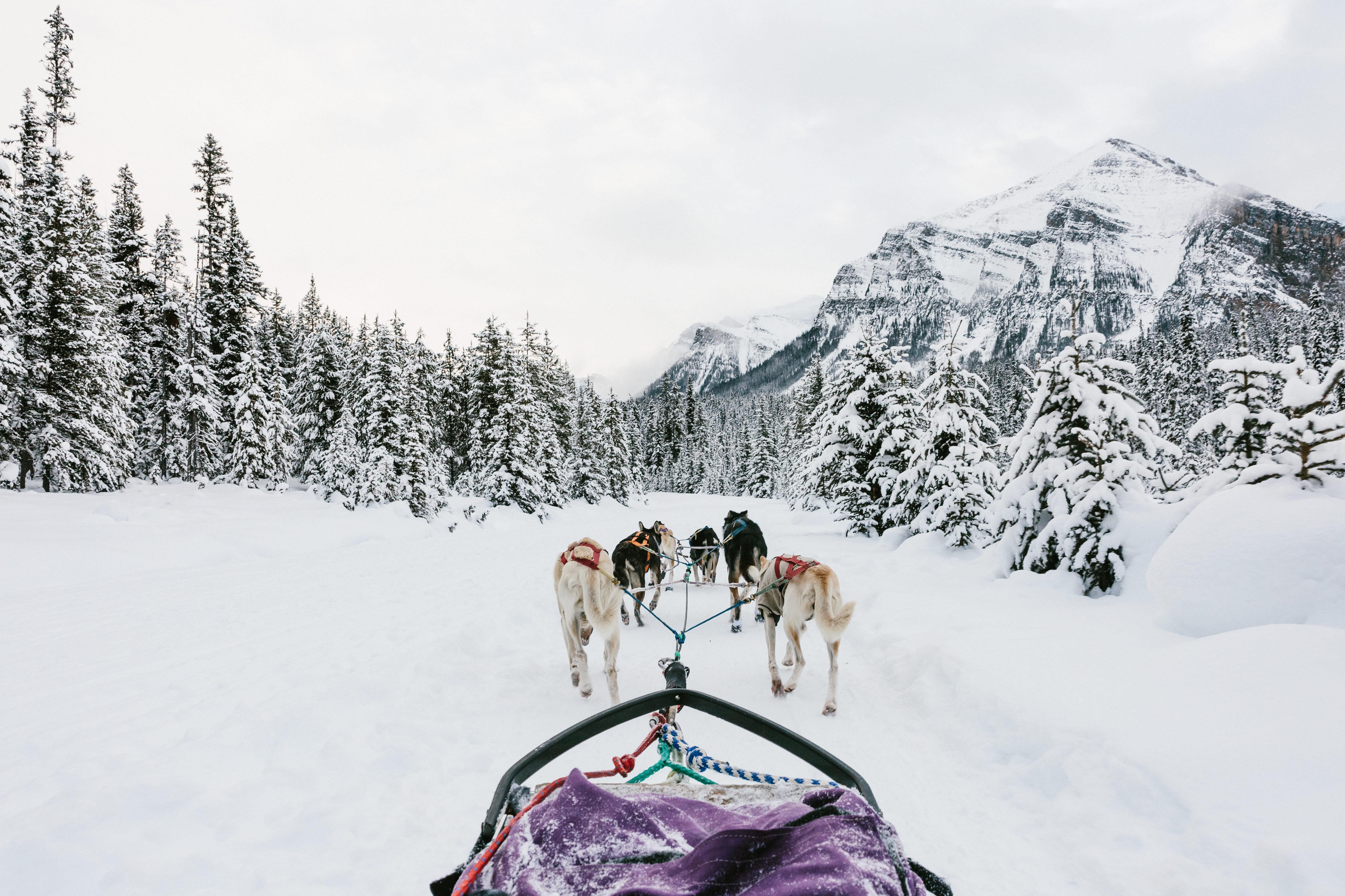 9 Best Winter Adventures in Banff Canadia - Dog Sledding - Renee Roaming