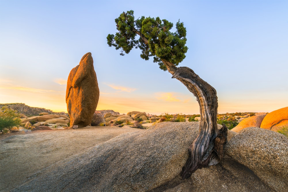 America's National Parks - Ranked Best to Worst - Joshua Tree National Park