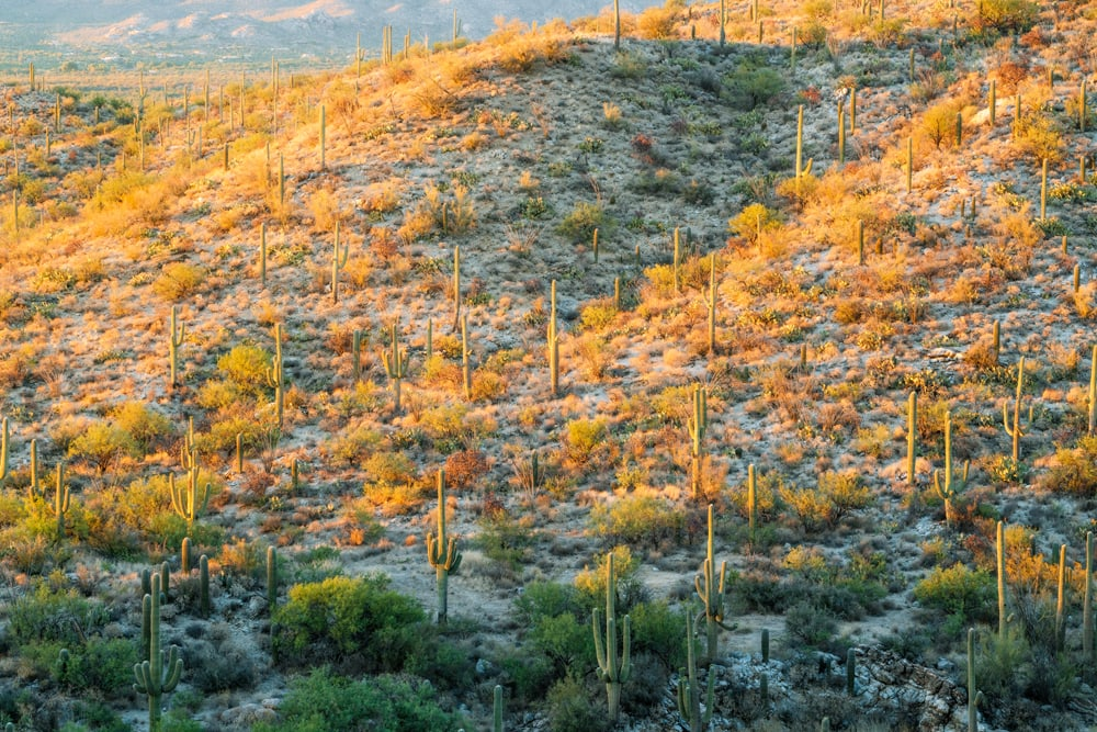America's National Parks - Ranked Best to Worst - Saguaro National Park
