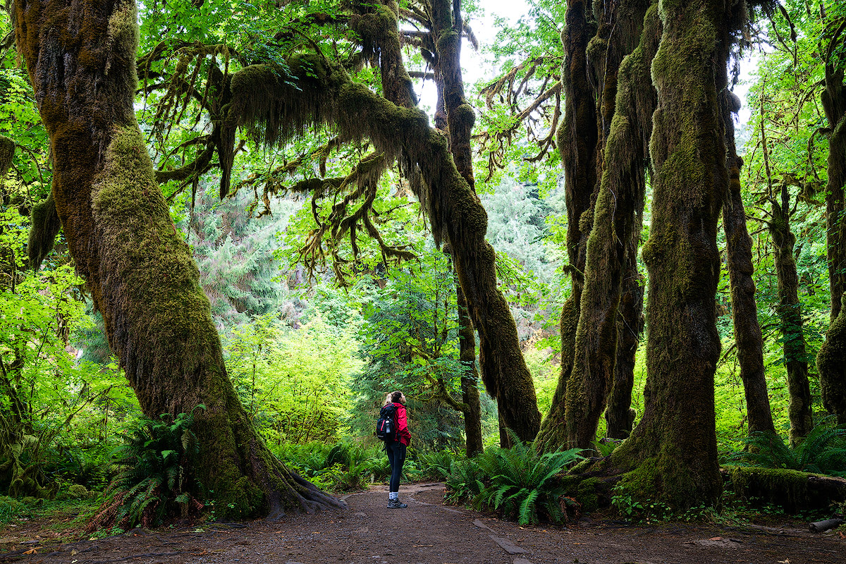 Olympic National Park Guide 59 National Parks Adventure Renee Roaming Hoh Rain Forest