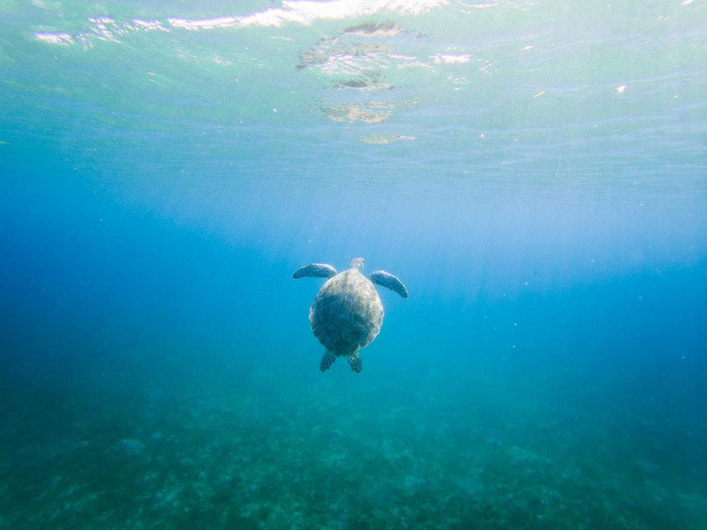 5 Best Things To Do On Oahu Renee Roaming Snorkel Turtle