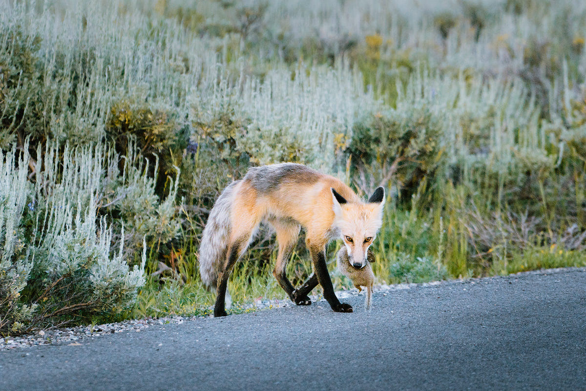 The Ultimate Guide to Exploring Grand Teton National Park - Wild Fox
