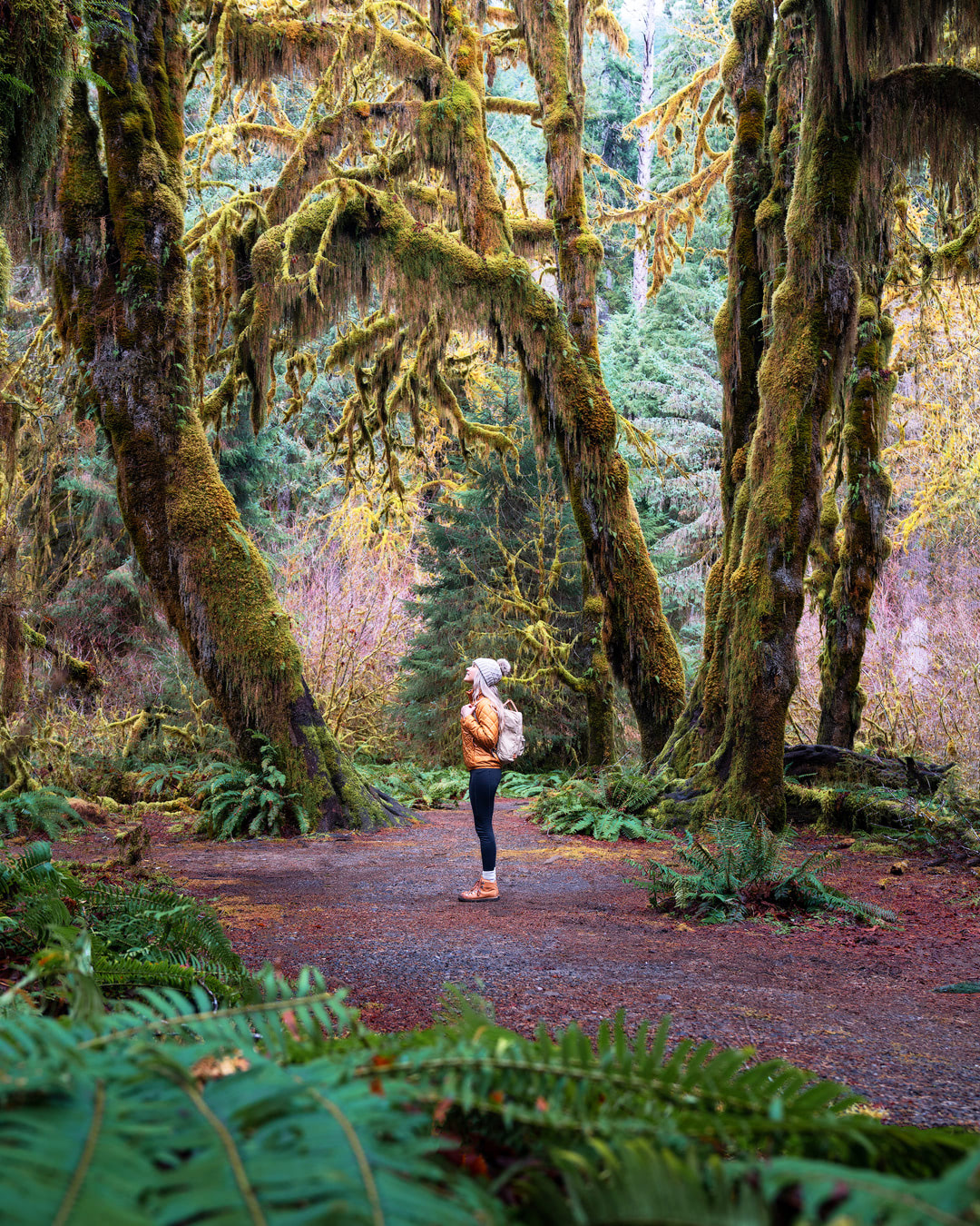 Beginner Friendly Hikes in Washington State - Hoh Rainforest Hall of Mosses Trail