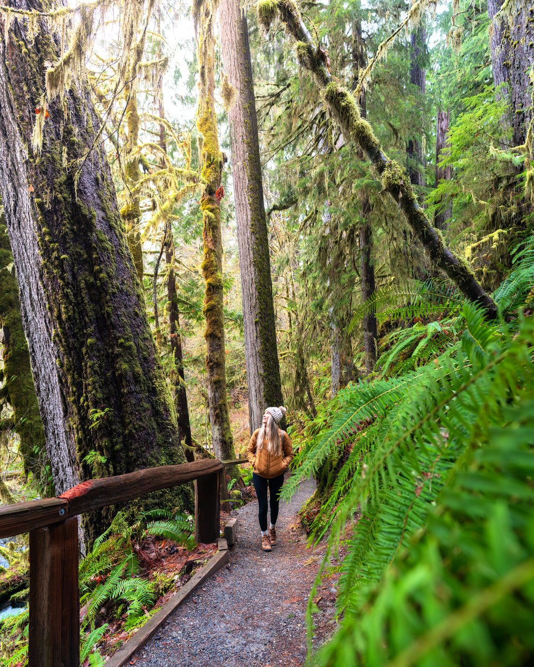 Beginner Friendly Hikes in Washington State - Hoh Rainforest Loop