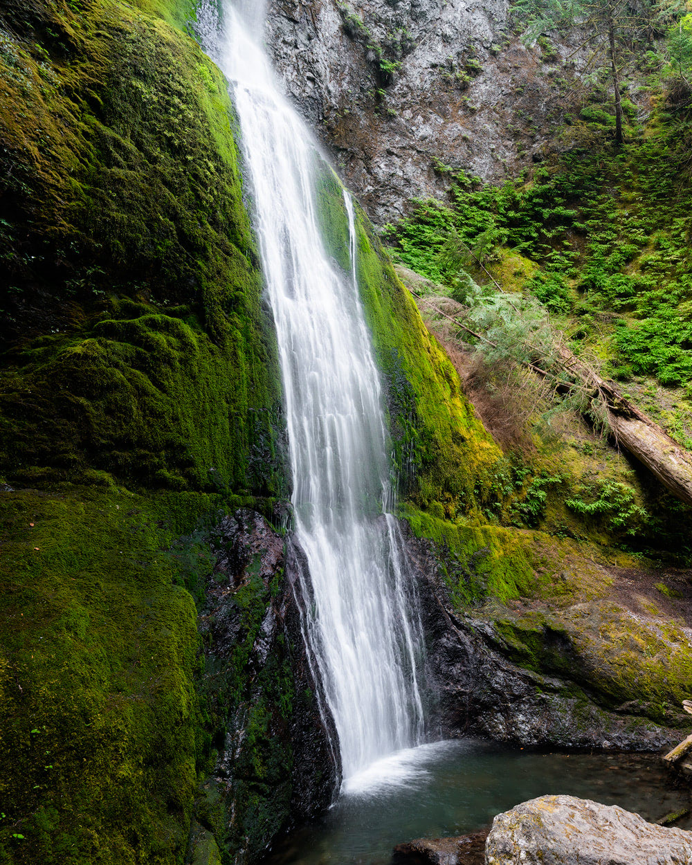 Beginner Friendly Hikes in Washington State - Marymere Falls Trail