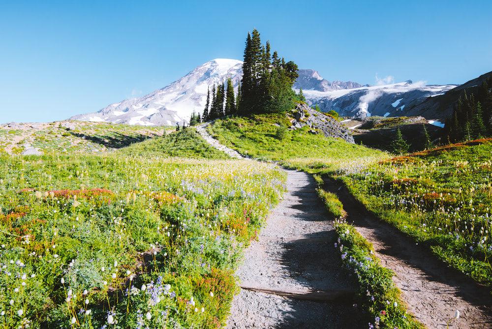 Beginner Friendly Hikes in Washington State - Mount Rainier Skyline Loop