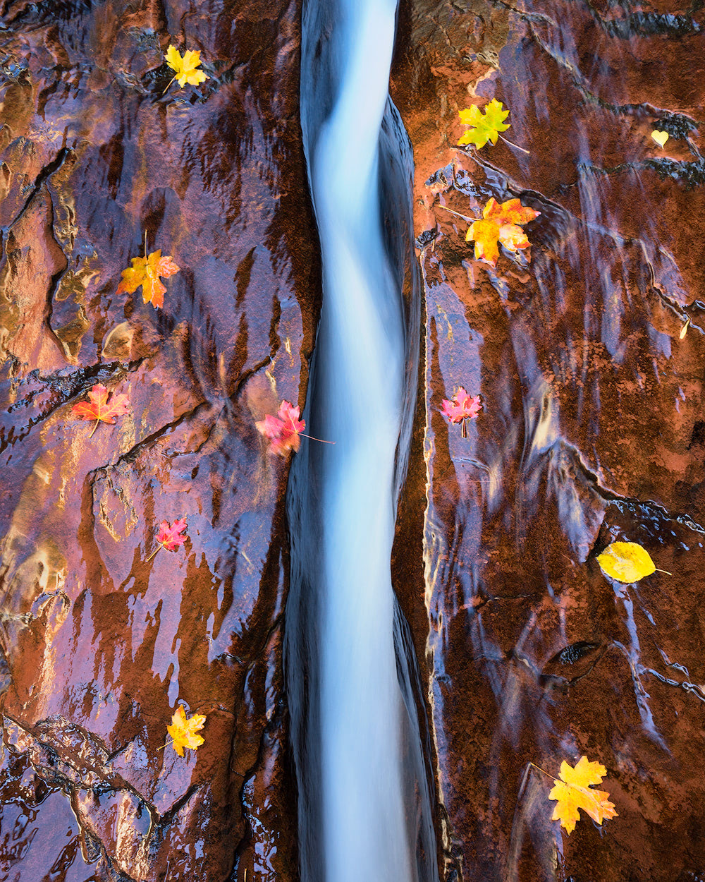 The Ultimate Guide to Exploring Zion National Park Photography