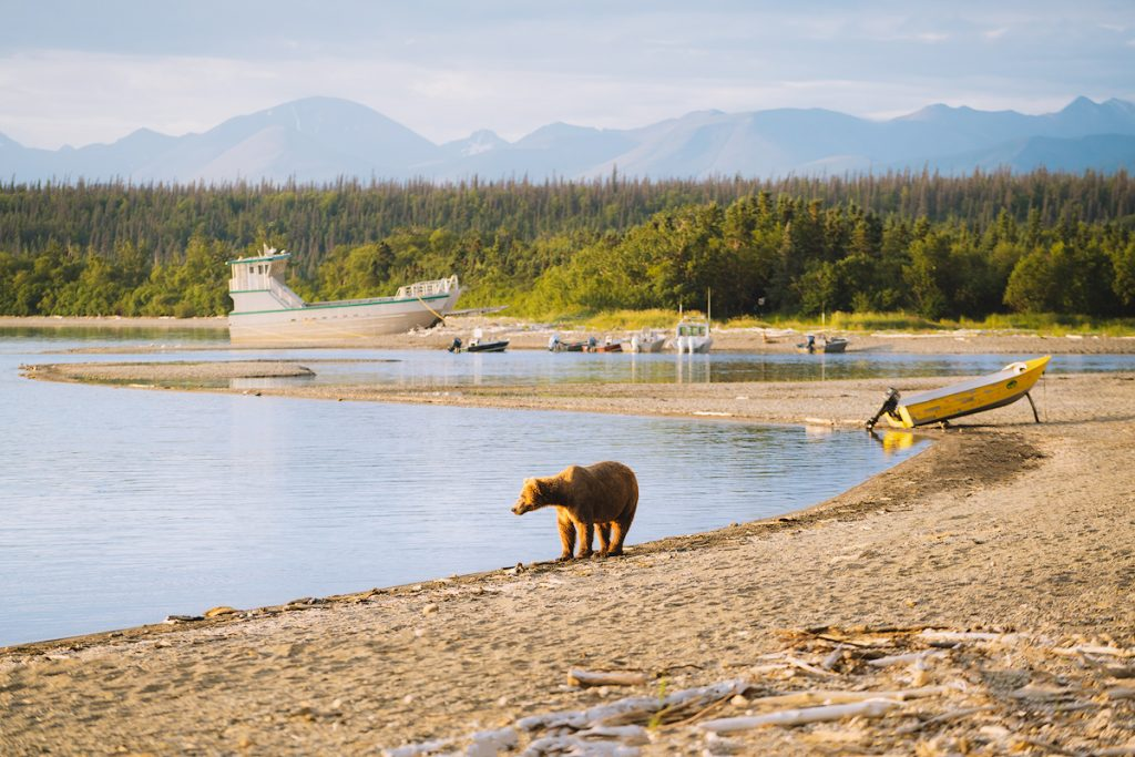 Introduction to Bear Safety when Hiking and Camping - Camping in Bear Territory in Katmai National Park Alaska