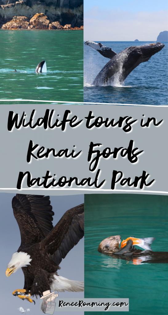 Wildlife Tours in Kenai Fjords National Park - Renee Roaming