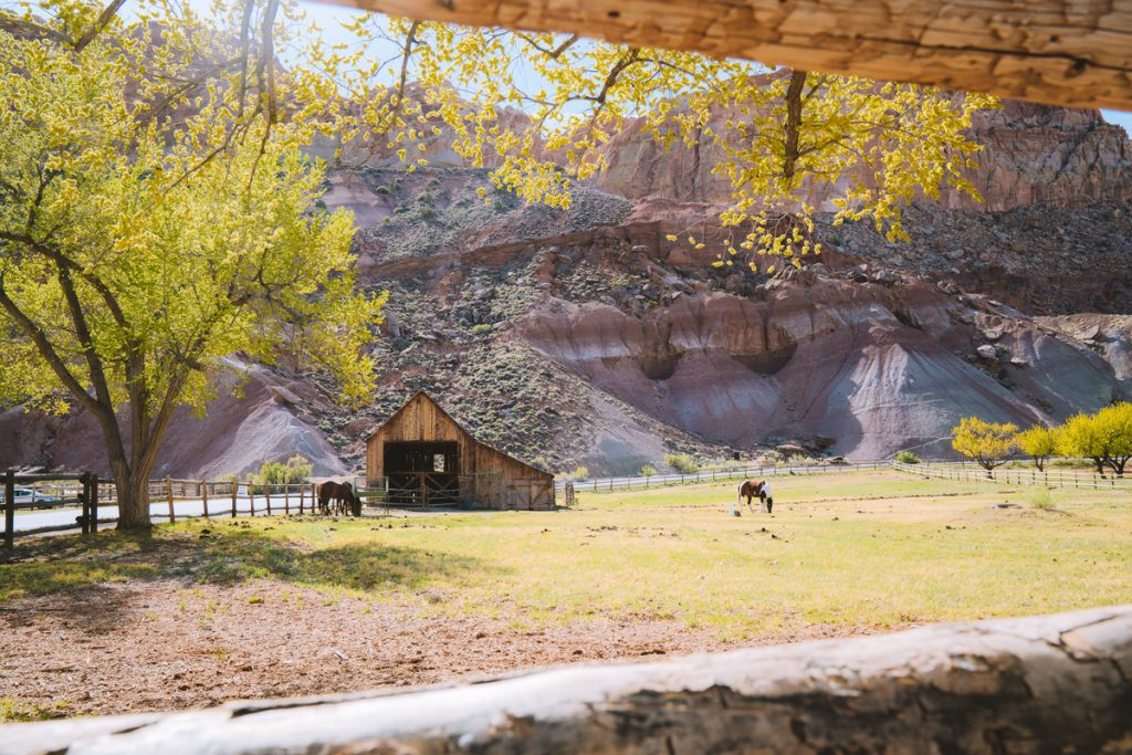 Best National Parks to Visit in Spring - Capitol Reef National Park - Gifford Farm