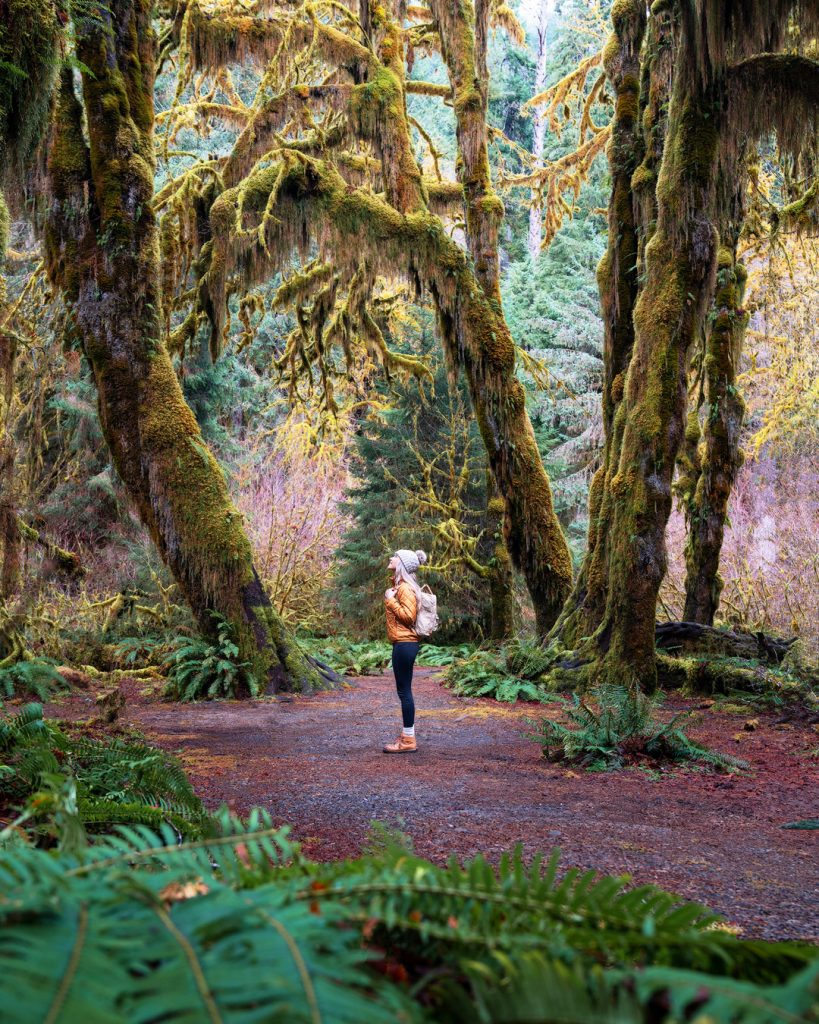 Best National Parks to Visit in Spring - Olympic National Park - Hoh Rainforest Hall of Mosses Trail