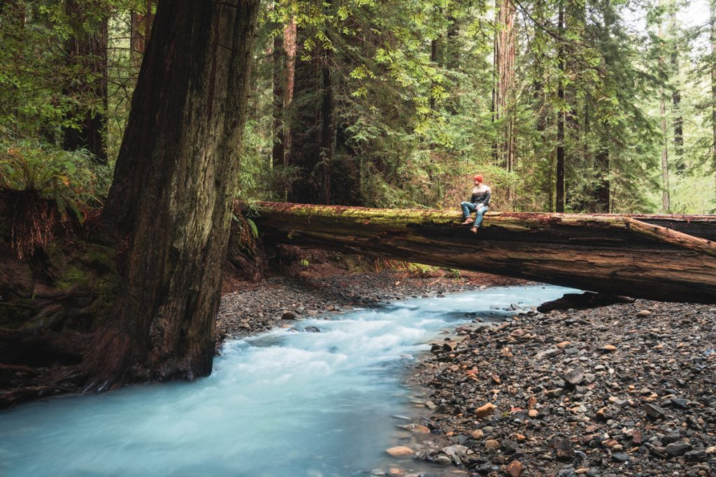 Best National Parks to Visit in Spring - Redwood National Park