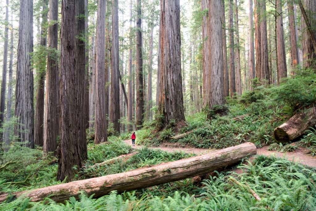 Best Spring National Parks - Redwood National & State Park Spring Travel Guide