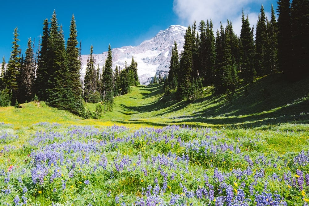 Best National Parks to Visit in Summer - Mount Rainier National Park Wildflower Meadow