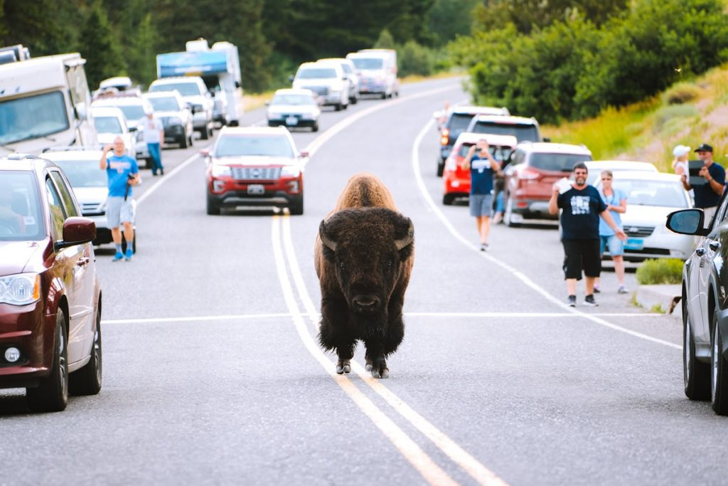 Ultimate Yellowstone To Grand Teton Road Trip Itinerary - How To Get Around the Parks